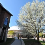 A view of a blooming tree, the School of Business and Gampel Pavilion.