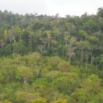 Old-growth Atlantic Rain Forest in background, with second-growth in foreground in Bahai, Brazil. (Wayt Thomas Photo)