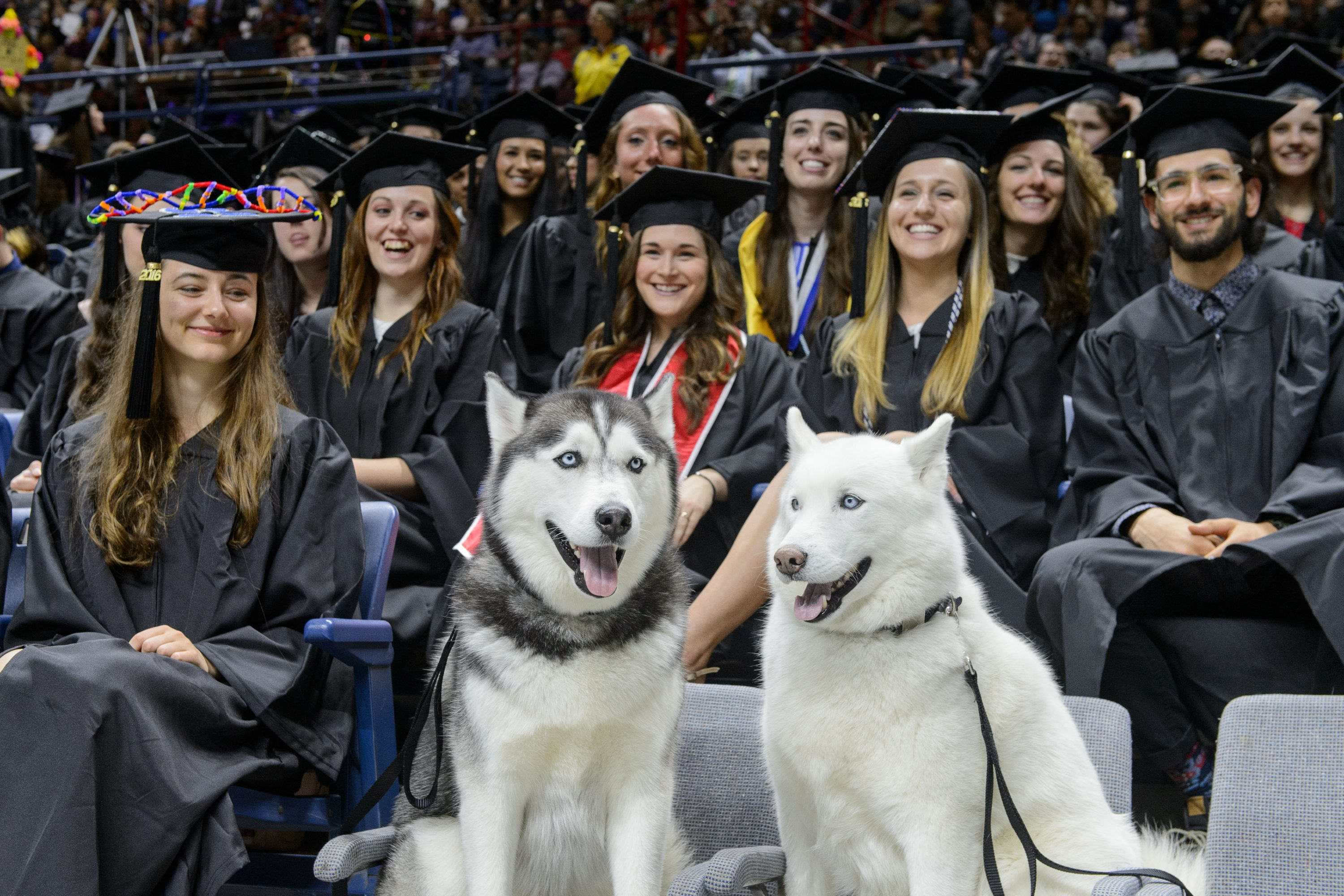 Jonathan XIV, left, and Jonathan XIII sit with students during the midday College of Liberal Arts and Sciences commencement ceremony at Gampel Pavilion on May 8, 2016. (Peter Morenus/UConn Photo)