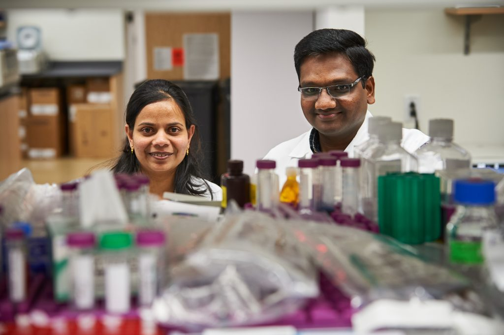 UConn Health researchers Sivapriya Kailasan Vanaja, left, and Vijay Rathinam find that sepsis – a deadly immune response – may stem from miscommunication among cells. (Peter Morenus/UConn Photo)