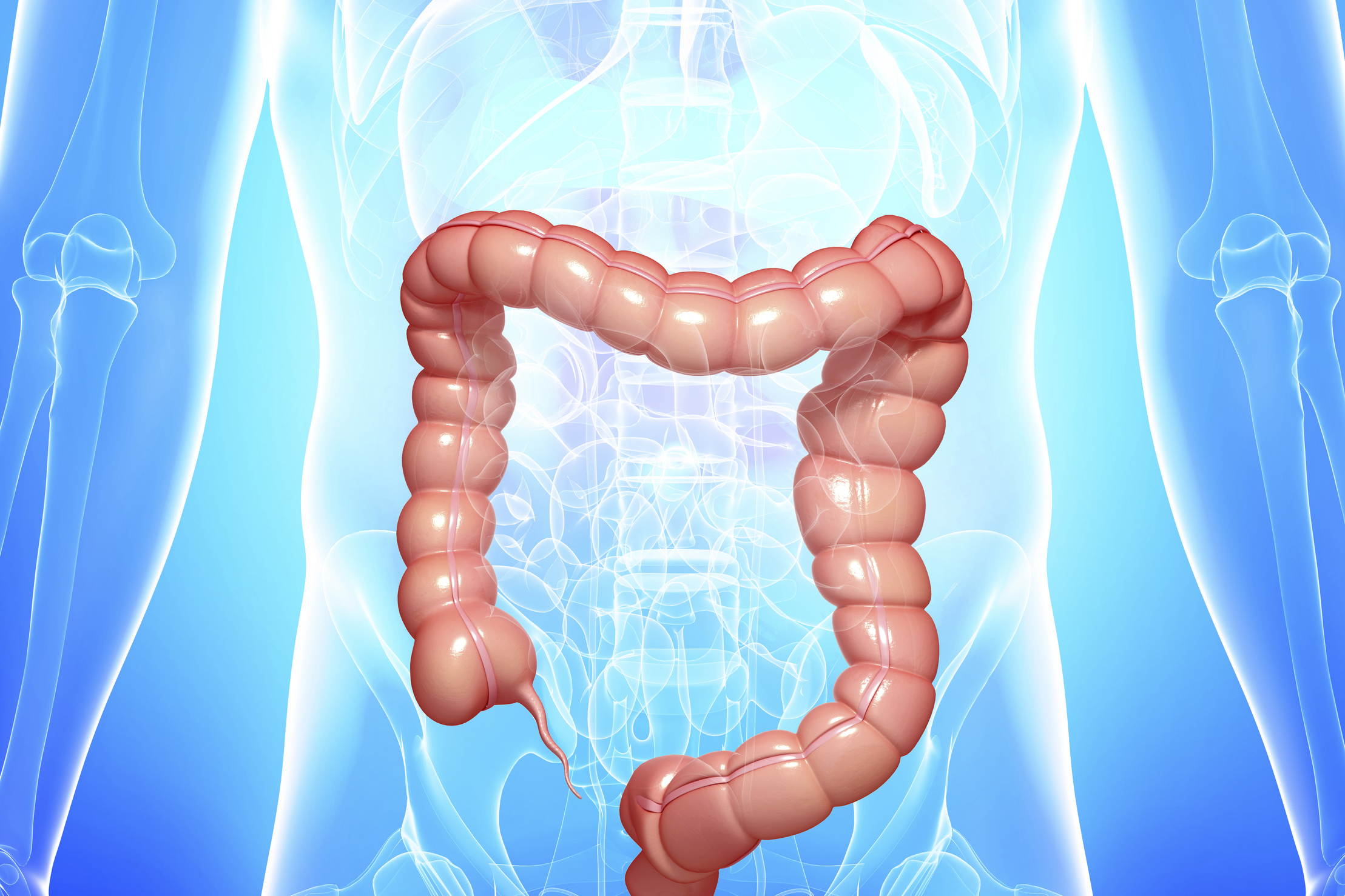 Illustration of human body with highlighted colon, or large intestine. (iStock Photo)