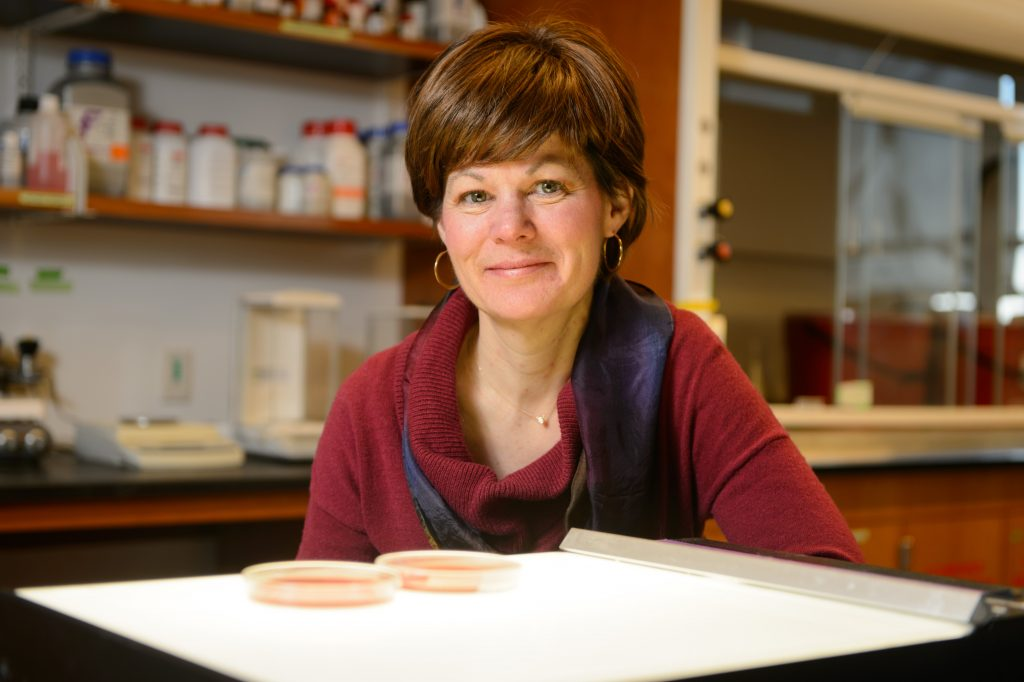 Amy Anderson with bacteria on plates on Jan. 23, 2015. (Peter Morenus/UConn Photo)
