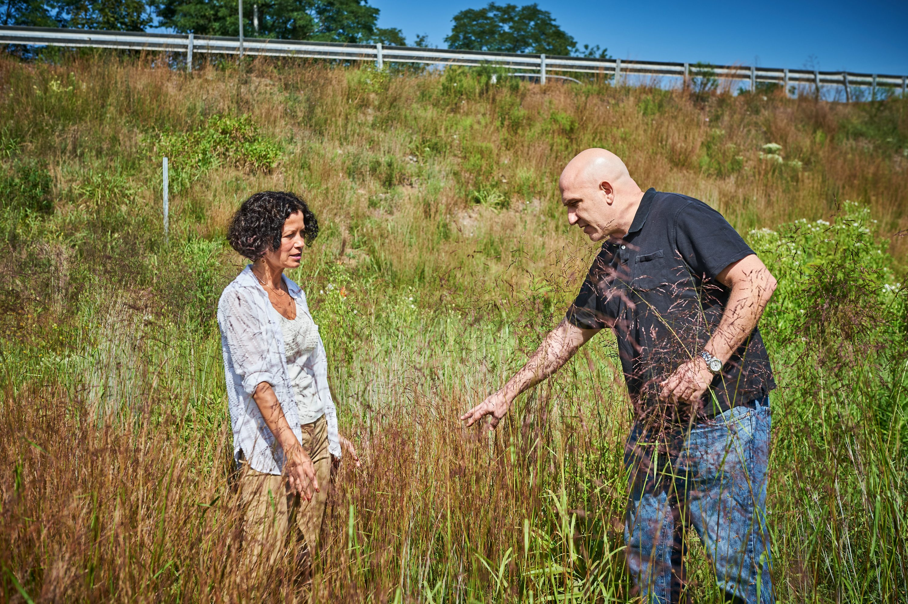 Yulia Kuzovkina-Eischen, associate professor of plant science & landscape architecture, and John Campanelli, a graduate student, inspect the growth of native species planted on DOT property along U.S. RT 6 in North Windham on Aug. 29, 2016. (Peter Morenus/UConn Photo)
