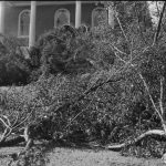 Hurricane_of_1938_ damage_on_campus_(2)