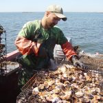 CT shellfish initiative. (Photo courtesy of Connecticut Sea Grant)