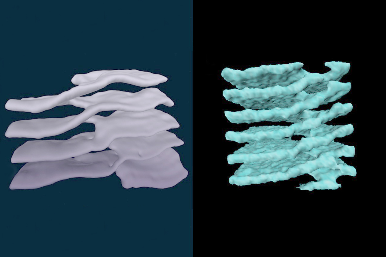 Structures called 'Terasaki ramps,' consisting of stacked sheets connected by helical ramps, have been found in cell cytoplasm (left) and neutron stars (right). The original structures were first identified by UConn Health cell biologist Mark Terasaki. (University of California, Santa Barbara Photo)