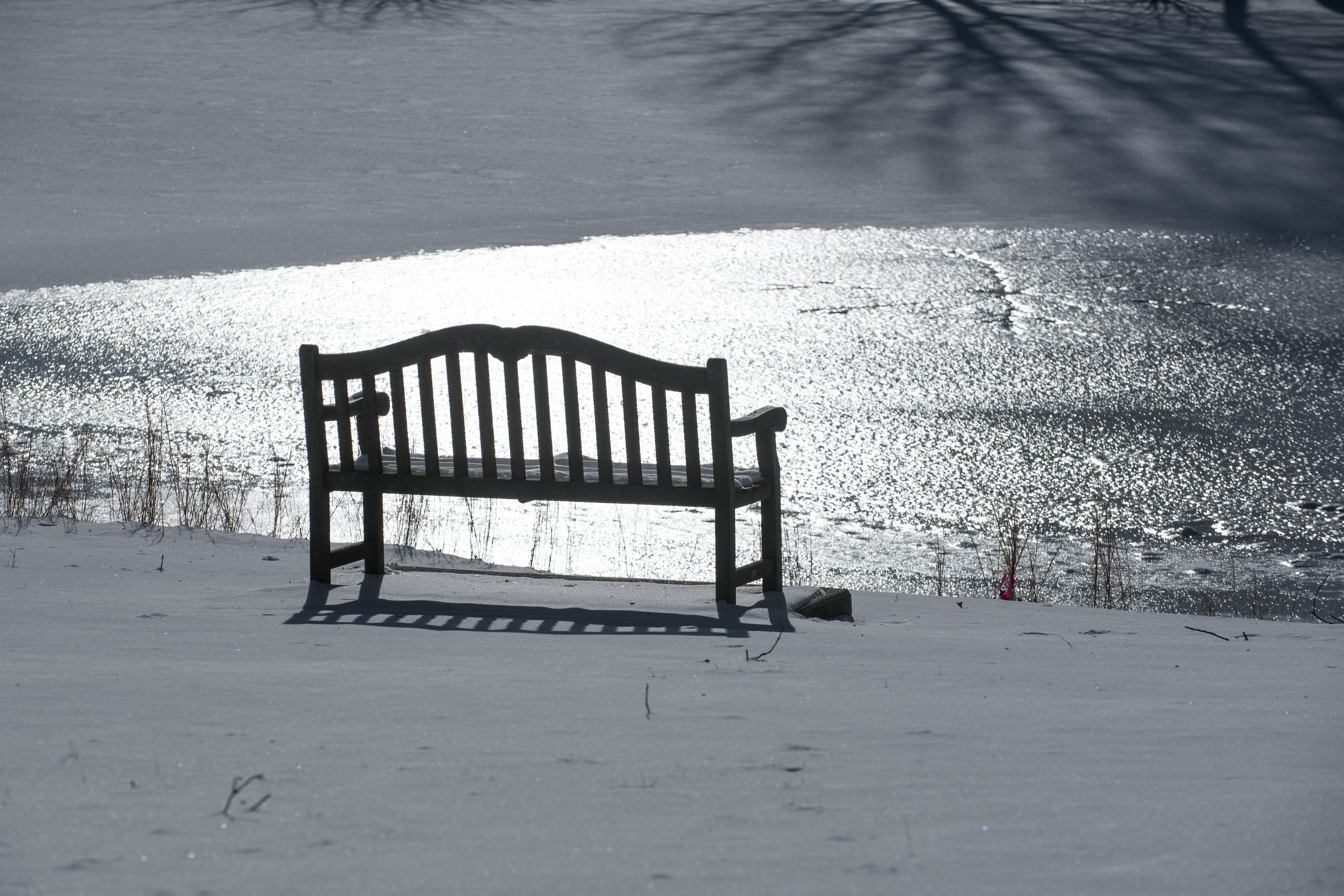 Sunshine after the snowfall adds sparkle and shadows to the landscape. (Sean Flynn/UConn Photo)
