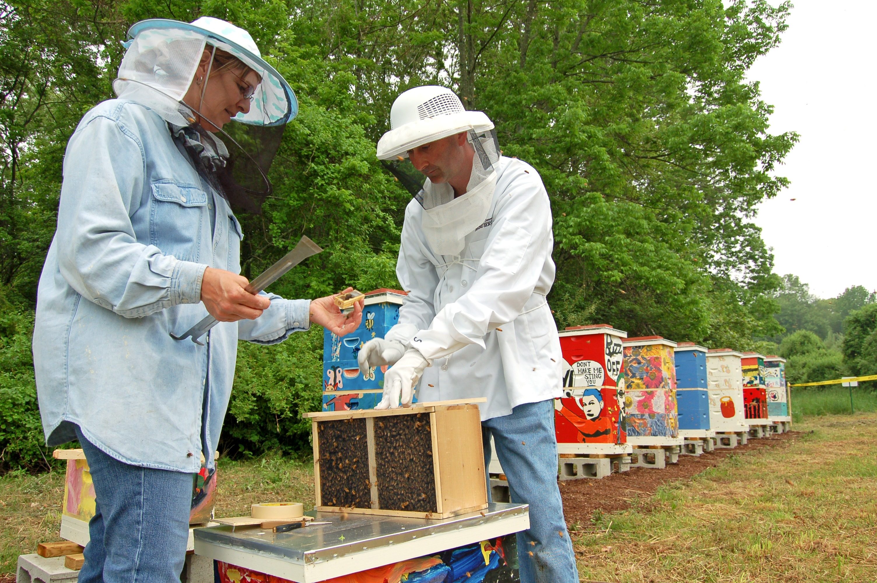 Amy Gronus (wearing blue), a production chef at the Northwest Dining Hall, and Stephen Anthony, area assistant manager of Dining Services release bees at the Dining Services Apiary. (UConn File Photo)