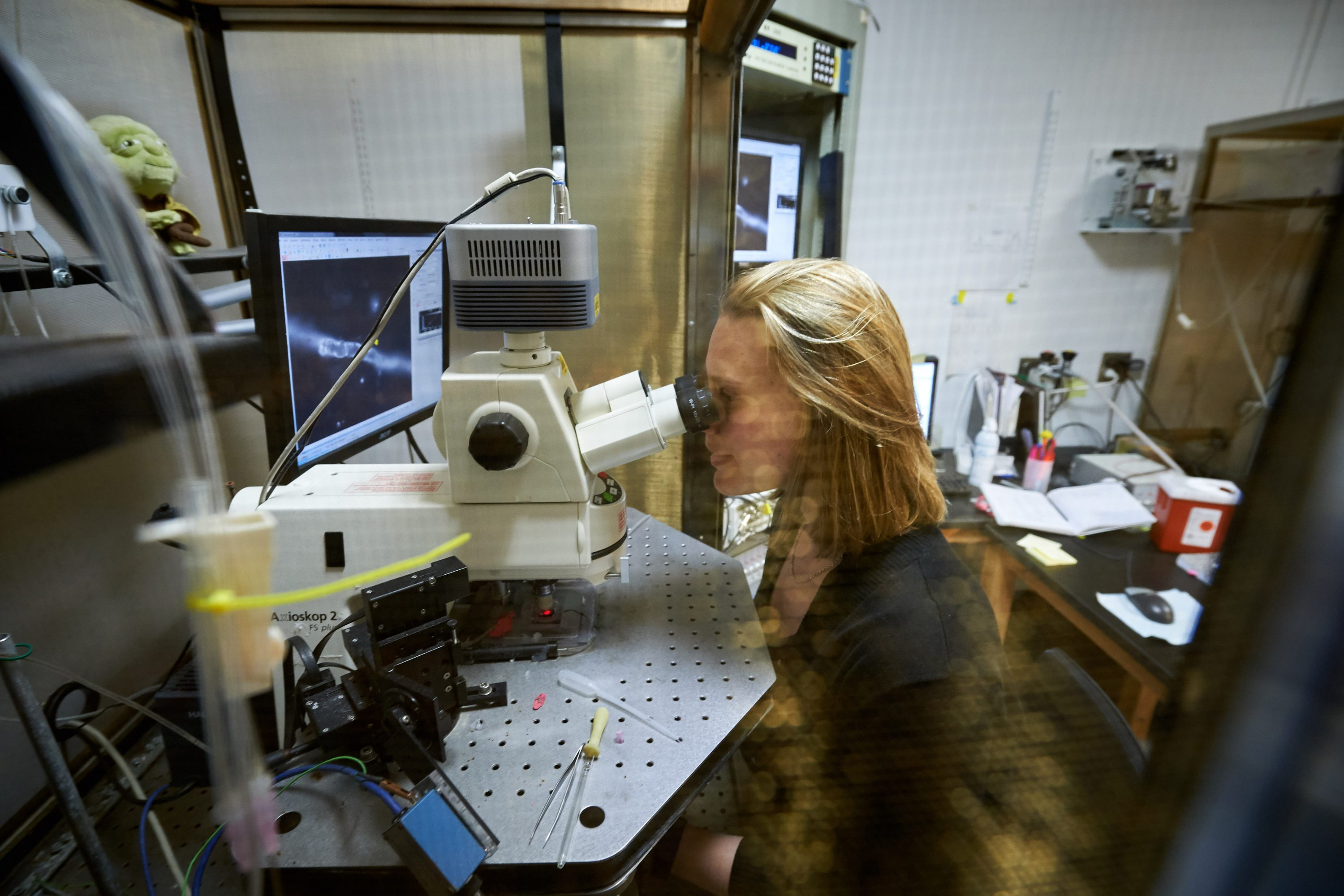 NIH postdoctoral fellow Virginia Hawkins looks though a microscope at the Pharmacy/Biology Building. (Peter Morenus/UConn Photo)