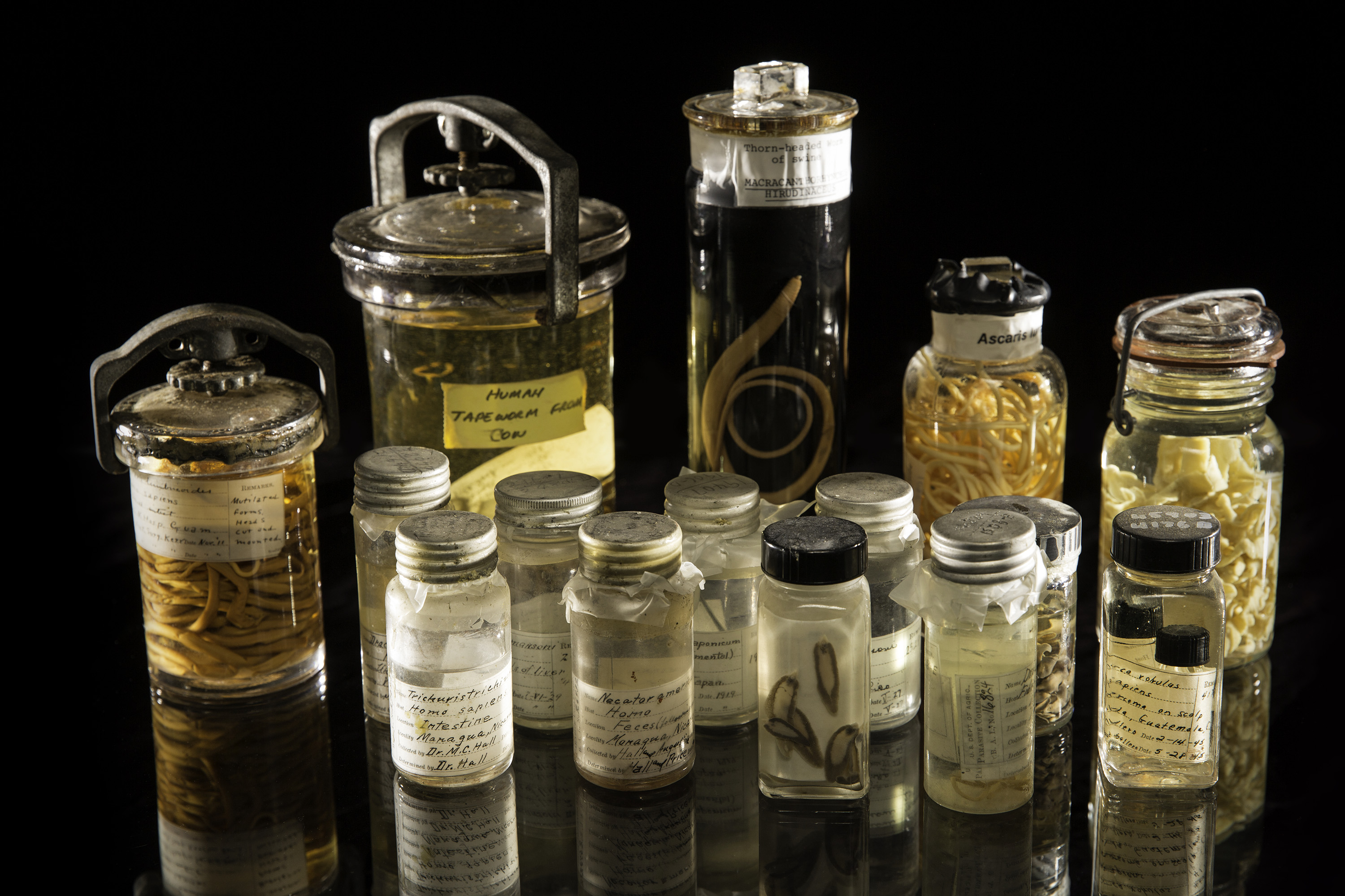 A sampling of specimens from the National Parasite Collection.