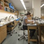 Sam Stine '18 (CLAS) working at the Biodiversity Research Collections facility. (Sean Flynn/UConn Photo)