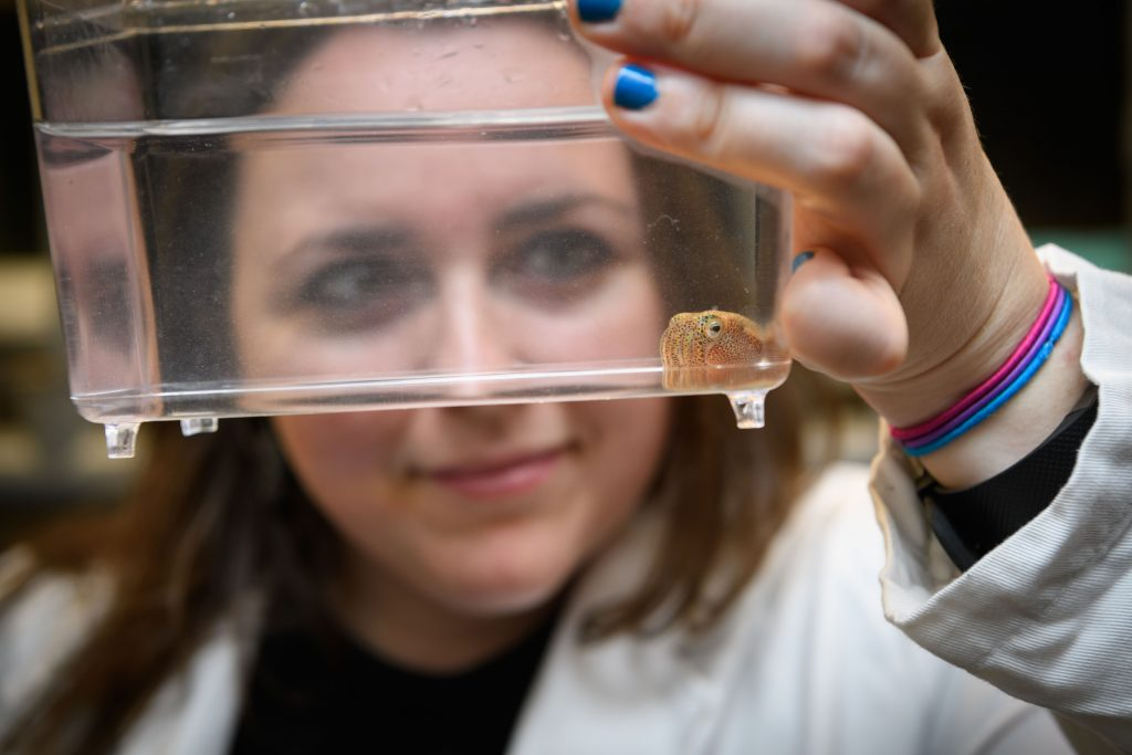 Sarah McAnulty with a squid in a lab at the Torrey Life Sciences Building. (Peter Morenus/UConn Photo)