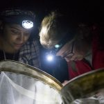 Vanesa Guadalupe, left, of Two Rivers High School in Hartford, now a UConn undergraduate, and Grace Herde of Hosatonic Valley Regional High School, survey insects in the UConn Forest during Biodiversity in the Night activities, part of the NRCA's Conservation Ambassador Program. (NRCA Staff/UConn Photo)