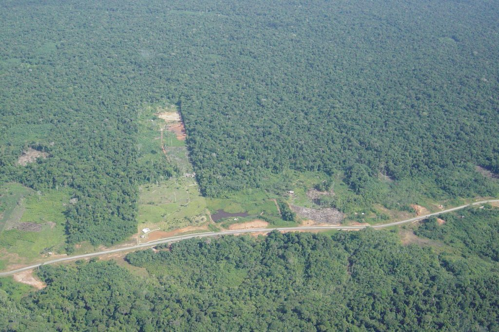 An aerial photo of tropical forest in Iquitos, Peru, shows the spread of forest edges due to the expansion of road networks, logging, agriculture, and other human activity. (Photo by Stephen P. Yanoviak)