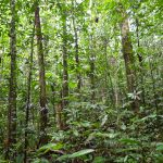 The interior of a 45-year-old second-growth forest that regenerated naturally on abandoned pasture in northeastern Costa Rica. The plot has been monitored annually for 20 years, contributing to the dataset used in this study. (Robin Chazdon/UConn Photo)