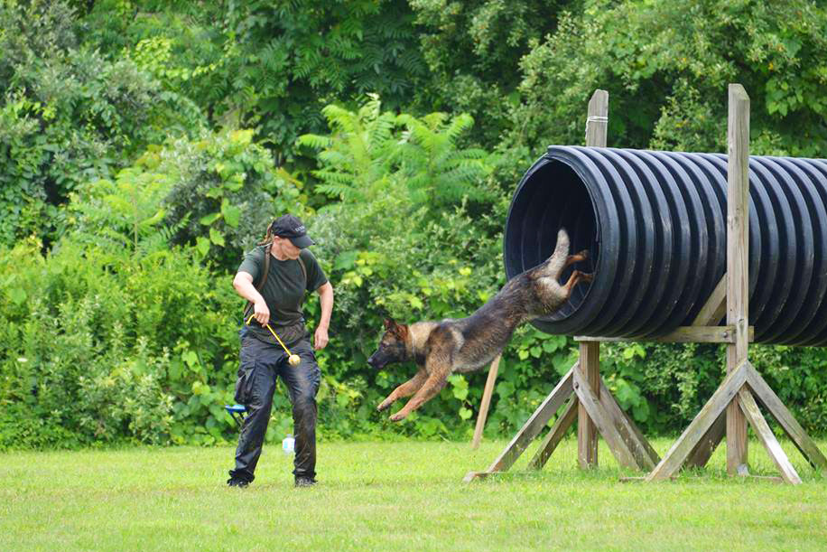 Officer Lindsey Gionfriddo works with Blaze during agility training. (Photo supplied by UConn K-9 Unit)