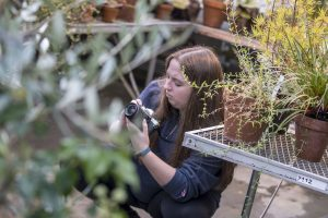 Alexis Abbotts '20 (SFA) takes photos at the UConn Biodiversity Education and Research Greenhouses.