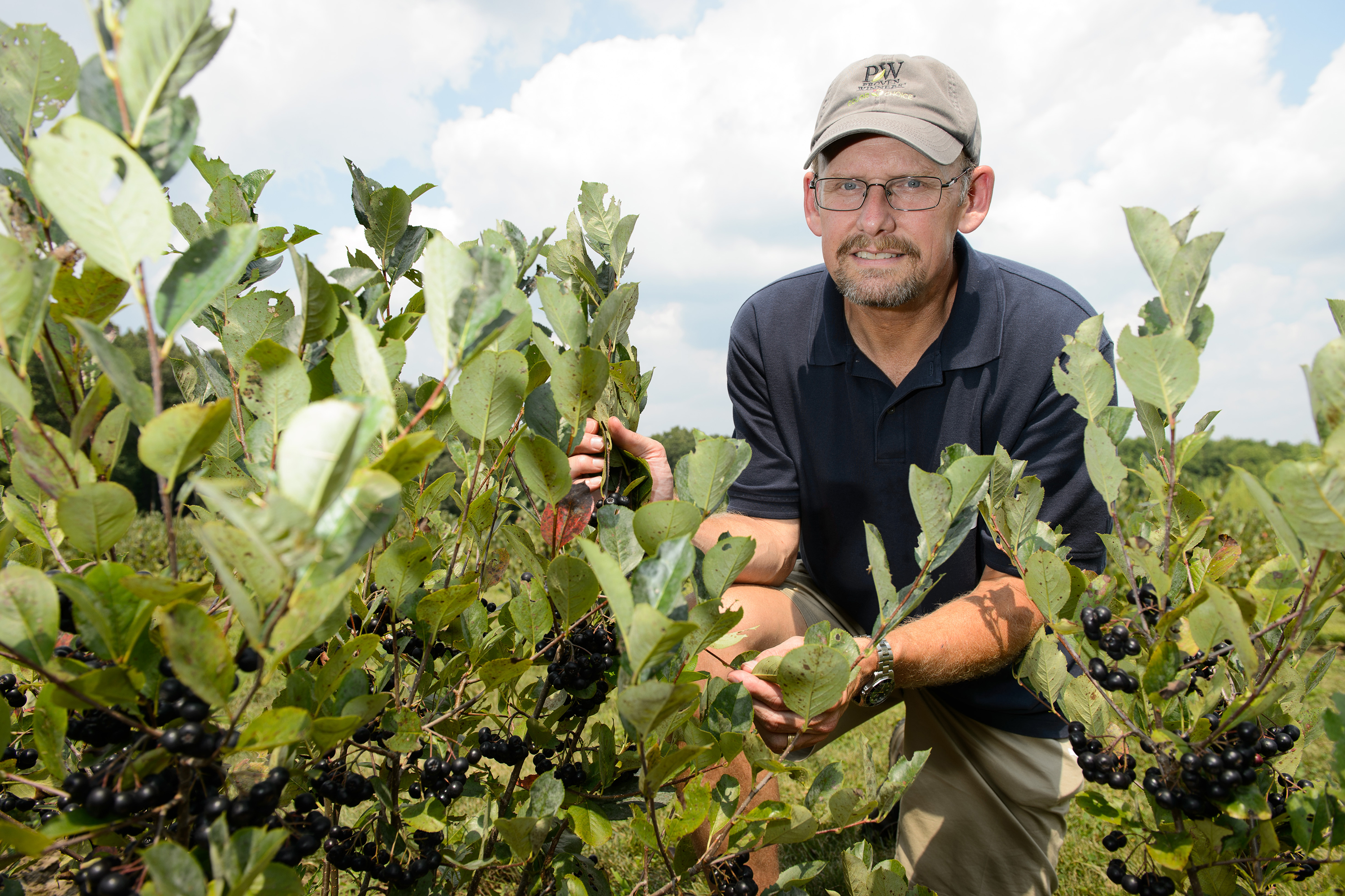 Mark Brand, professor of plant science and landscape architecture, with Aaonia berries growing at the Plant Science Research Farm on Aug. 9, 2012. (Peter Morenus/UConn Photo)
