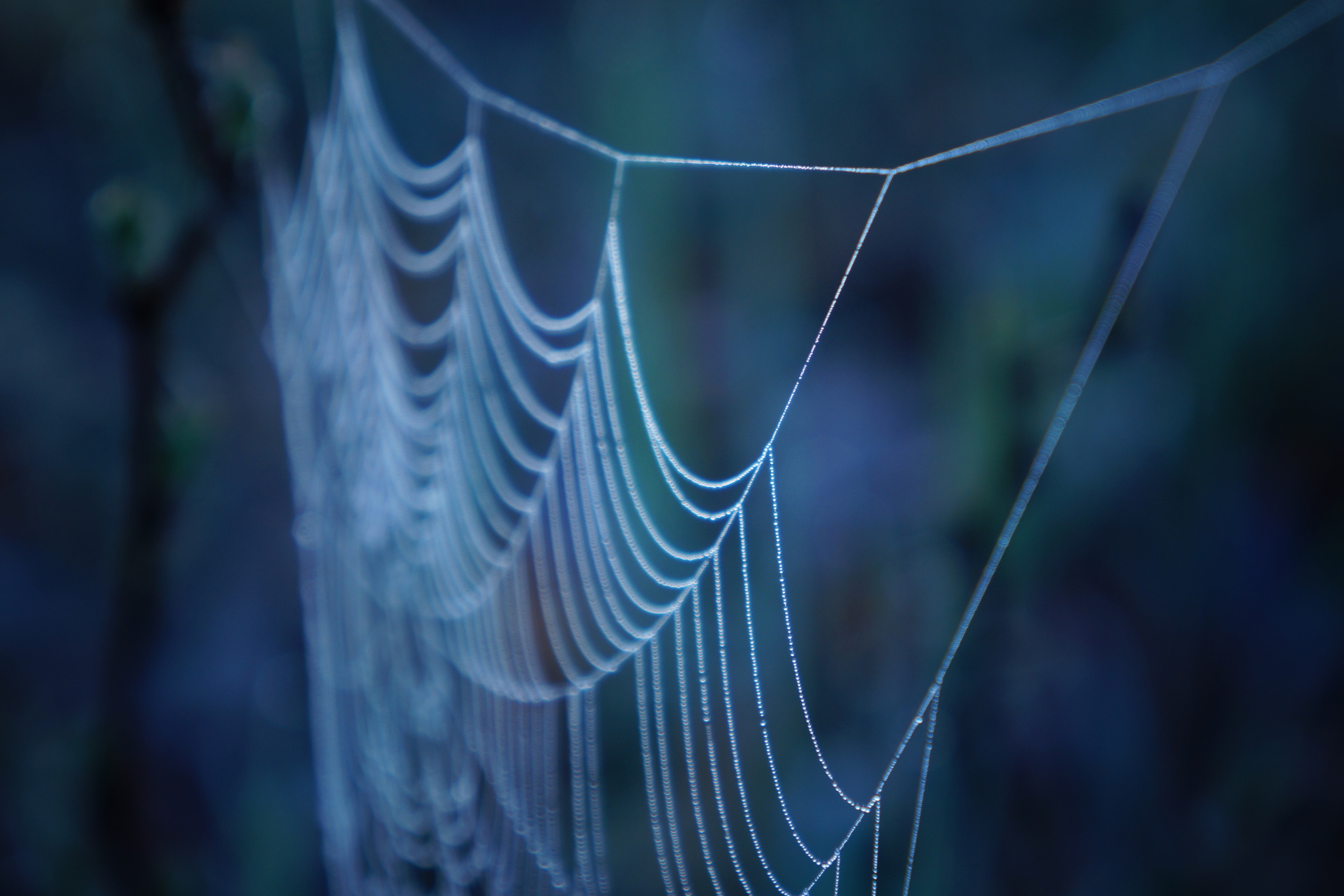 Close-up of a spider web. A UConn materials science team has developed an innovative composite for healing broken load-bearing bones based on a protein found in the silk fibers spun by spiders. (Getty Images)