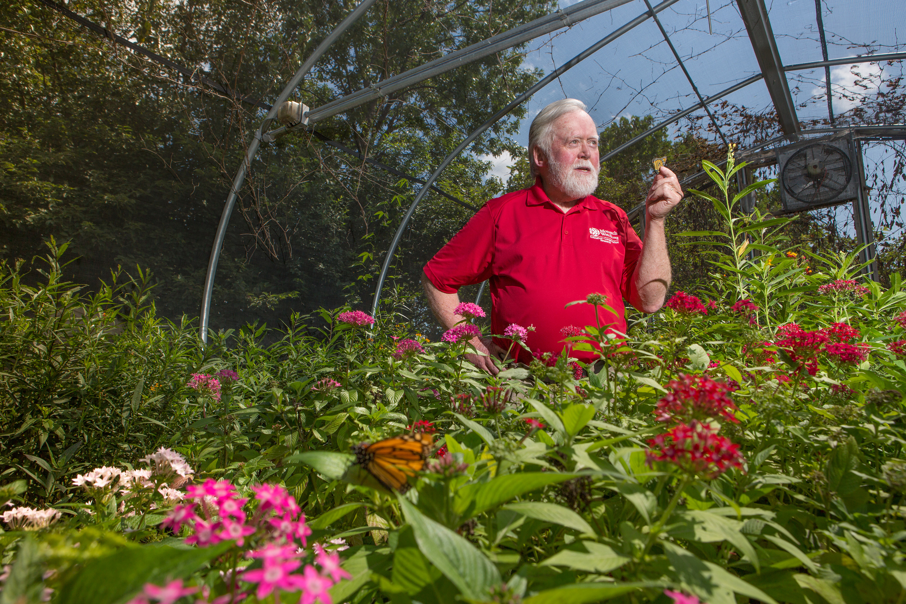 UConn alum Orley R. 'Chip' Taylor '66 MS, '70 Ph.D., wants everyone to plant a little milkweed and bring back the quickly disappearing monarch butterfly. (Photo courtesy of the University of Kansas/Marketing Communications)