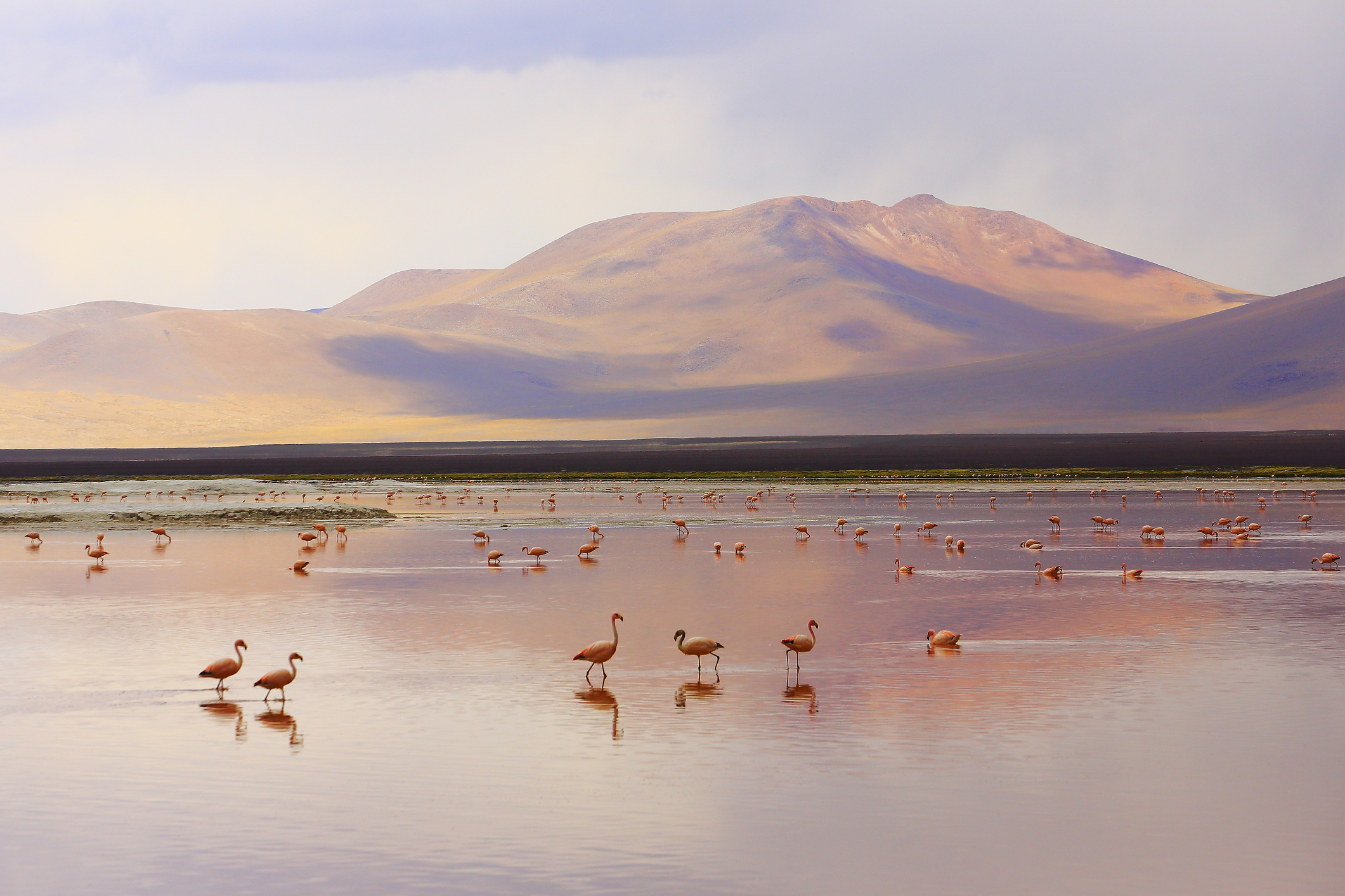 Red lake reflection, Andean Flamingos birds in the Bolivian Andes. (Photo/Getty Images)