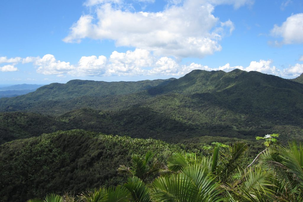 The El Yunque National Forest, showing the lush tropical rain forest home to complex ecosystems that scientists like Mike Willig are working to better understand. (Jason Lech/UConn Photo)