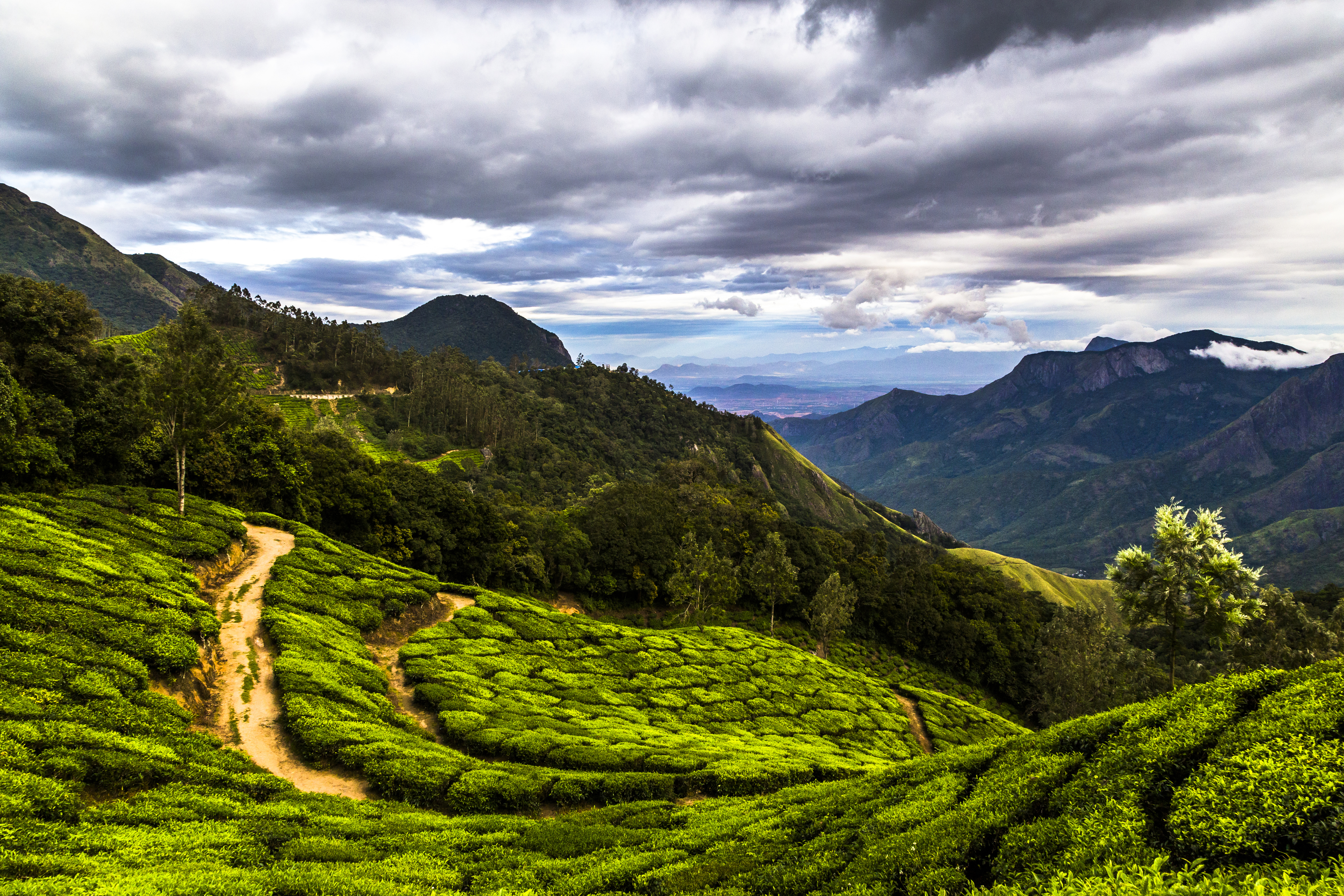 An international team of researchers showed that fragmentation weakens the impact of some 'natural enemies' that help maintain diversity in a tropical system. The study was conducted in fragmented tropical forest in India, in an area that now holds many tea plantations. (Getty Images)