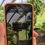 A data analytics tool called Splunk enables students to monitor the temperature and humidity in the greenhouse on their smartphones (or computers or Appletvs). (Jon Moore/UConn Photo)