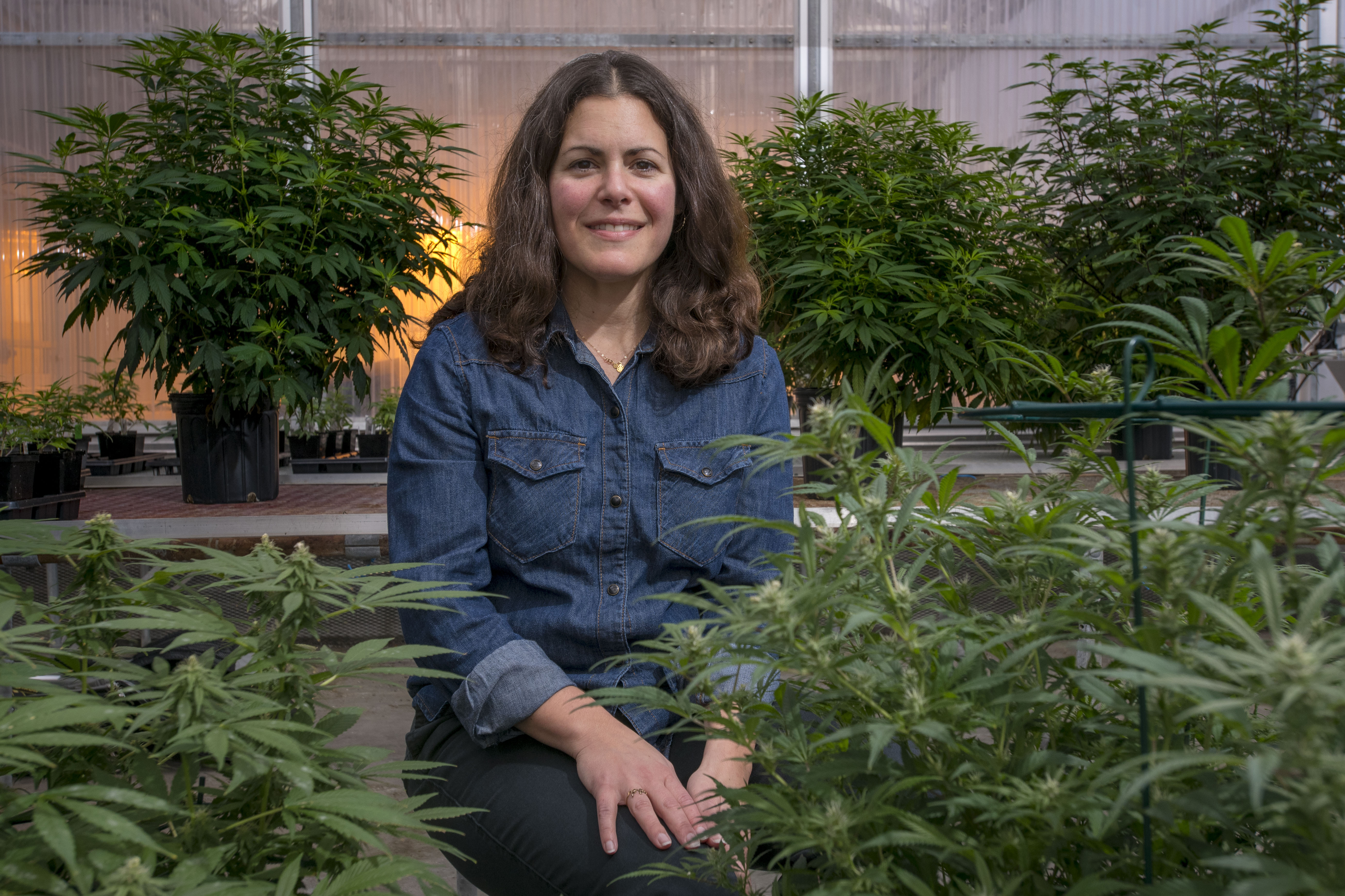 Jessica Lubell, associate professor of plant science, with hemp plants at the Floriculture Greenhouse. (Sean Flynn/UConn Photo)