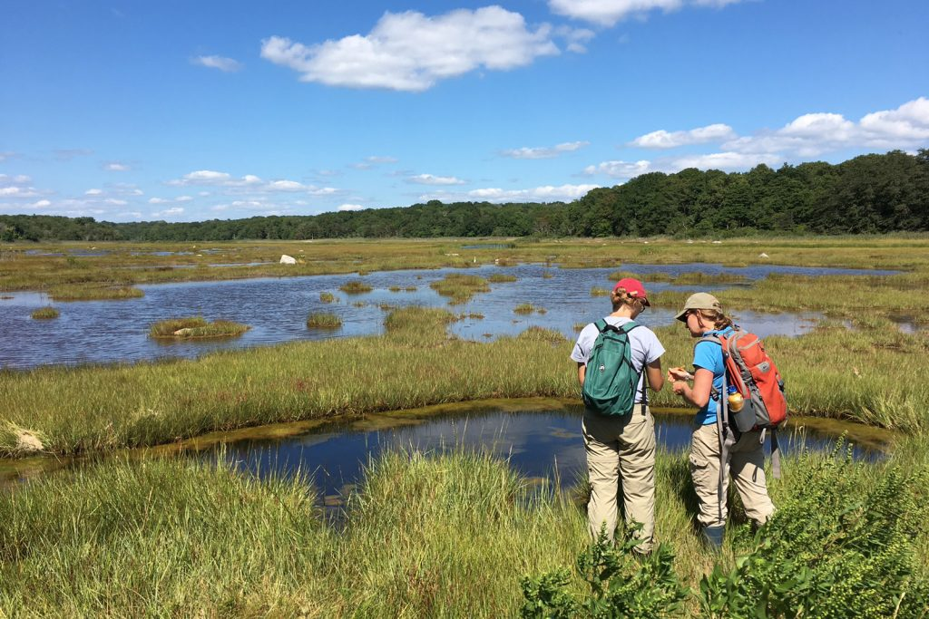 Madeline Kollegger '18 (CAHNR) and Beth Lawrence collecting data on surface water salinity in a tidally restored marsh at Barn Island Wildlife Management Area, Stonington, Connecticut, during an Advanced Wetland Ecology class. (Emily Couture '17 (CAHNR)/UConn Photo)