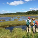 Two faculty in the Department of Natural Resources and the Environment, Ashley Helton and Beth Lawrence, are studying the processes that occur in wetlands and marshes, which are one of the largest natural sinks for carbon. The post was part of a series on Climate Change on Our Backyard. (Emily Couture '17 (CAHNR)/UConn Photo)