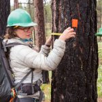 Measuring habitat characteristics that affect woodpeckers in burned forests. (Photo by Jean Hall)