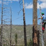 Lead researcher Andrew Stillman climbs a vertical ladder to access woodpecker nests.  (Photo by Jean Hall)