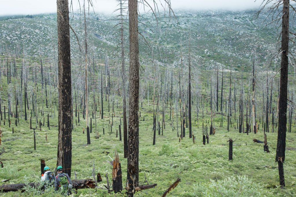 A burned valley, where black-backed woodpeckers forage for grubs in dead trees. Groups of these skeleton-like trees are called 'snag forests.' (Photo by Jean Hall)