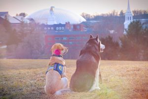 Puppy Love: A UConn Love Story