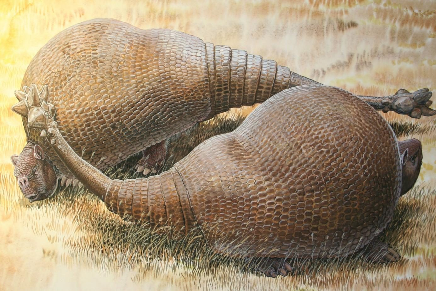 Two male glyptodonts (Doedicurus clavicaudatus) facing off: The massive, club-shaped tails were probably used more for intraspecific combat than defense against predators. ( Peter Schouten Illustration)
