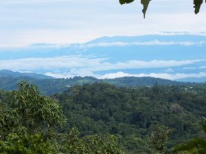 The experiment took place in a tropical premontane wet forest in southern Costa Rica.