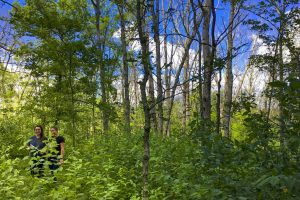 UConn Collaborates on Gypsy Moth Cleanup