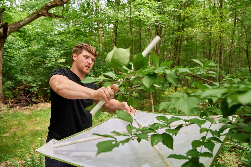 Christian Connors '20 (CLAS) collects caterpillars near Dog Lane in Storrs on July 11, 2019. (Peter Morenus/UConn Photo)