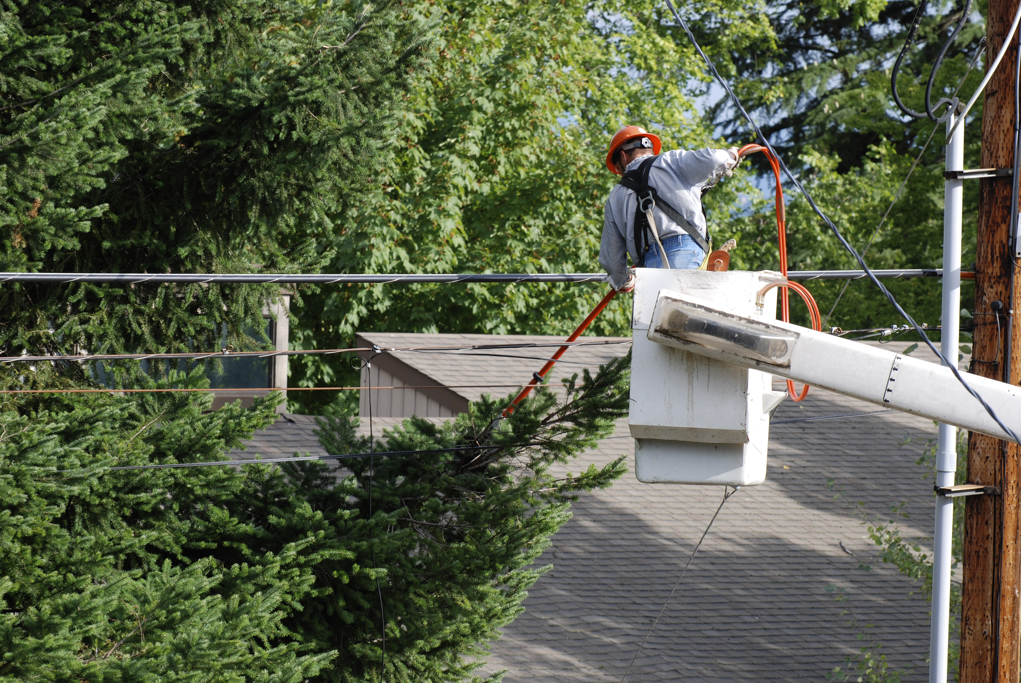 A man in a cherrypicker with an orange power saw, trimming evergreen branches