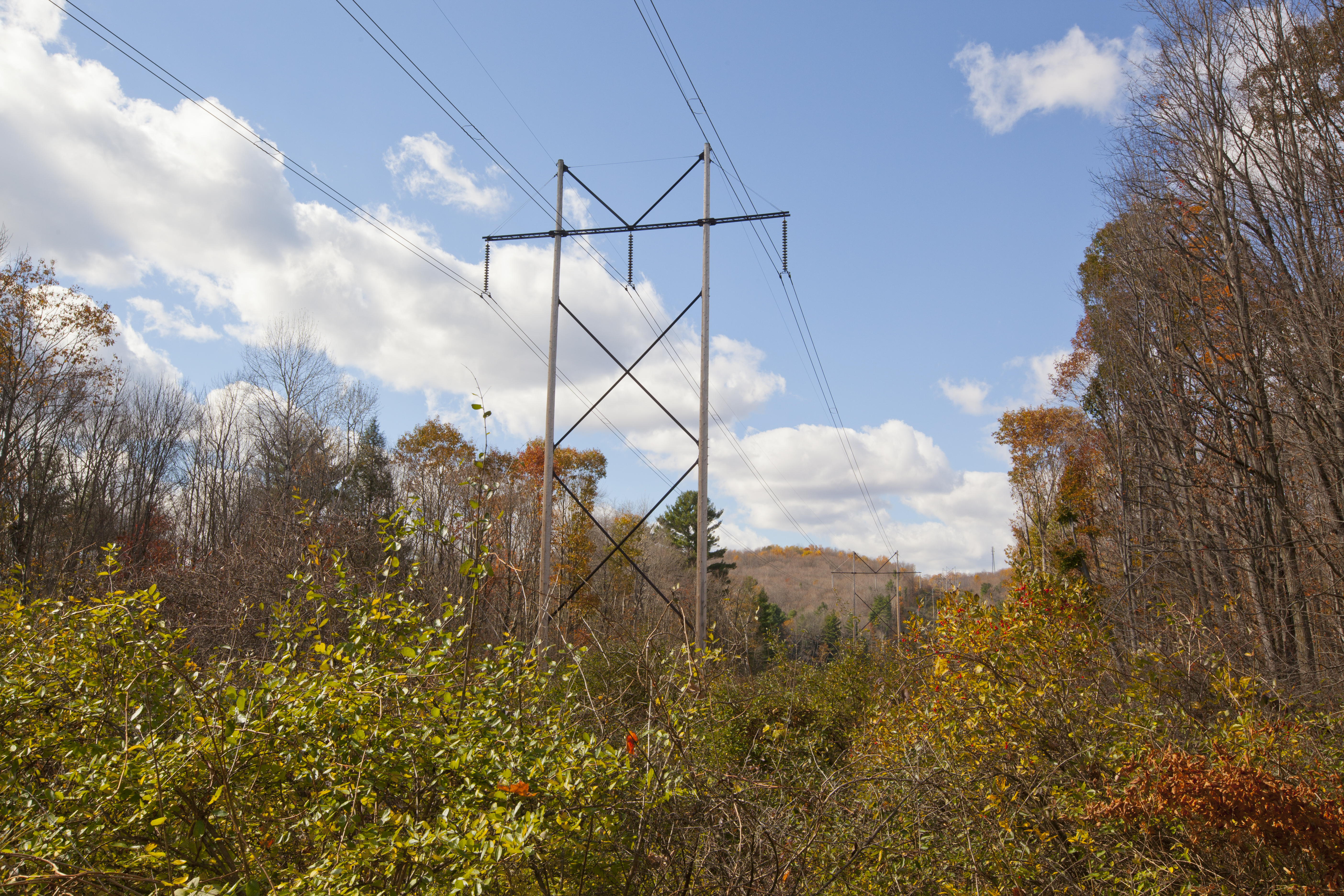 A view of high tension wires with autumn foliage. (Getty Images)
