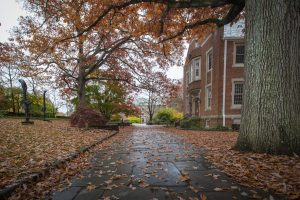 Autumn leaves scattered on the ground behind the Benton Museum on a rainy day
