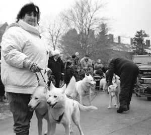 Linda and Bill Hahn of  SnoLyn Kennel in Willington prepare their team of Husky dogs for a dog-sled demonstration,  part of The Connecticut State Museum of Natural History's Discovery Days: Discover Life In The Polar Regions program in 1998. (Richard Boynton/UConn File Photo)