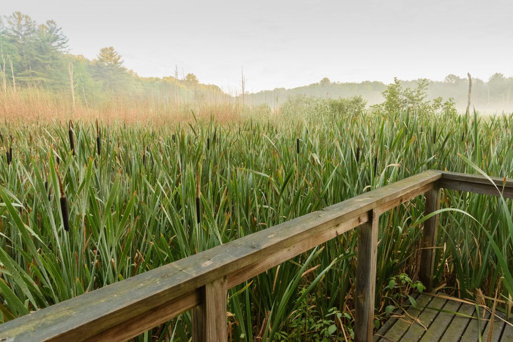A view of wetlands at the Hillside Environmental Education Park. Photo by Peter Morenus