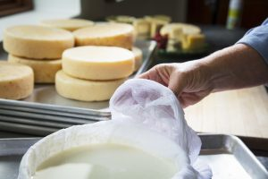 A pair of hands at work in the cheese making process.