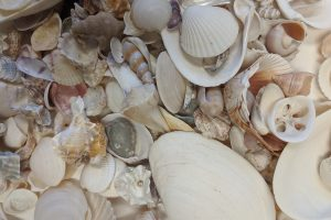 Paleontologists Discover Why the Oceans are So Diverse