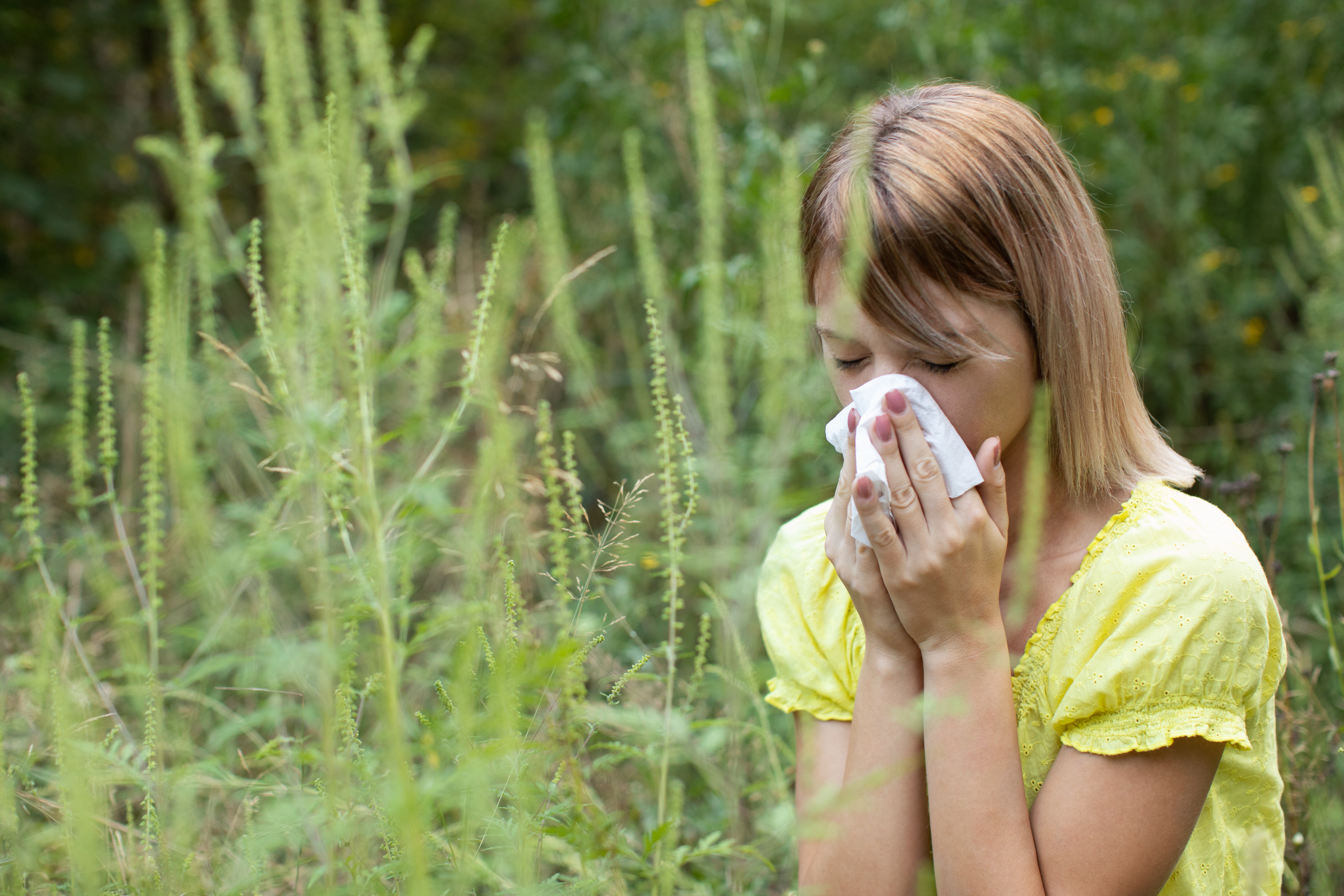A woman covers her mouth and nose in a field of ragweed.