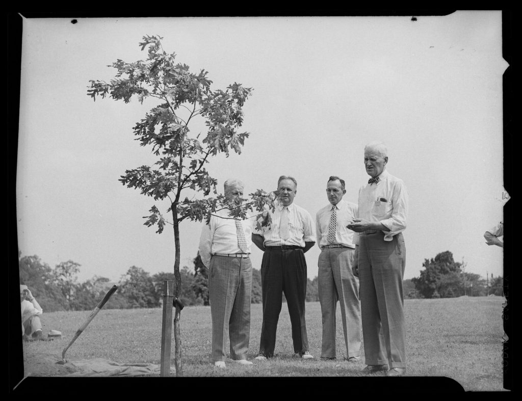 "Planting class trees at UConn has a history stretching back to the 19th century. Here, in a photo from the University Archives and Special Collections, is a photo of the Class of 1947 tree, described in contemporary notes as ""a grandson"" of the famed Charter Oak."