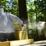 Megan Chiovaro uses fragrant smoke to calm the honeybees (Jaclyn Severance/UConn Photo)