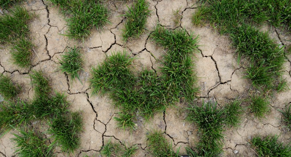 Dry soil and grass, caused by drought.